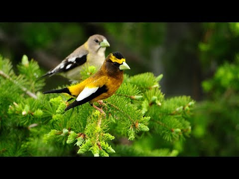 Nature Video Background Hd - 1080p 4k Animal stock video footage free download