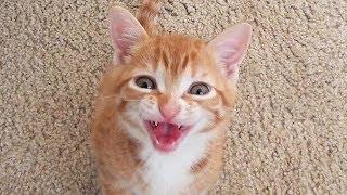 Smart Kitten Talks to Owner!