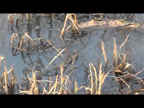 видео: Нерест щуки через поляризационные очки.