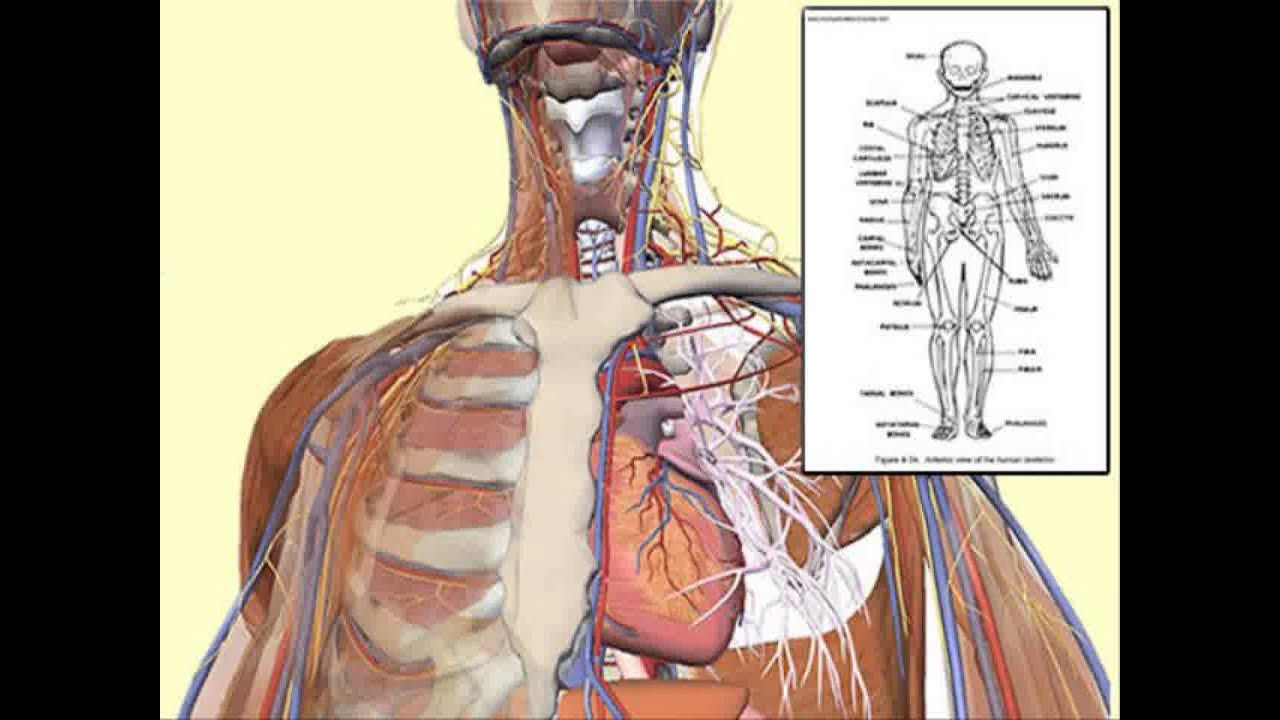Human Anatomy Course Description Youtube