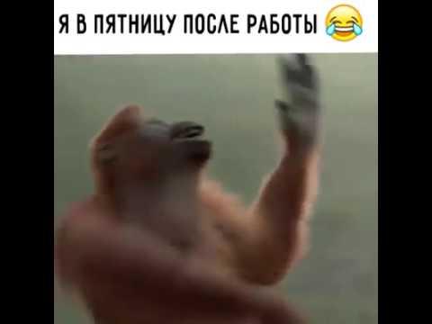 Táncolo majom letöltés