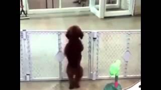 Собака танцует чтоо? WTF?!