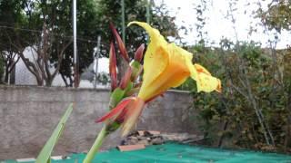 San Gregorio. Schalè delle Mimose