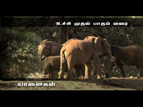 Elephants the Intelligent Animal - Award Winning Documentary