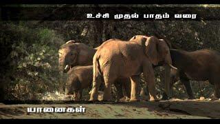 Elephants the Intelligent Animal - Award Winning Documentary