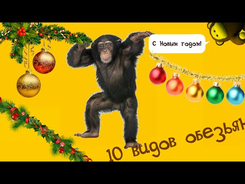 Bantest#120 : 10 видов обезьян