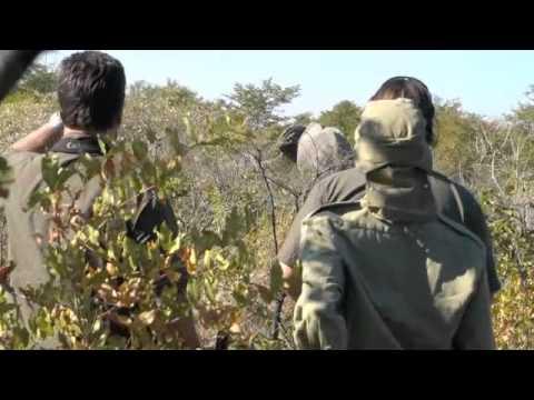 Botswana Elephant Hunting Safari [African Hunting Safari]