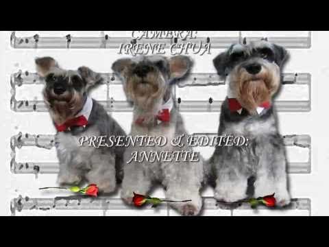 Funny Trio of Singing Dogs present 'A Schnauzer Symphony'