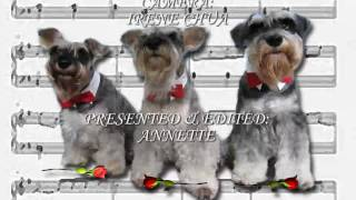 Funny Trio Of Singing Dogs Present A Schnauzer Symphony