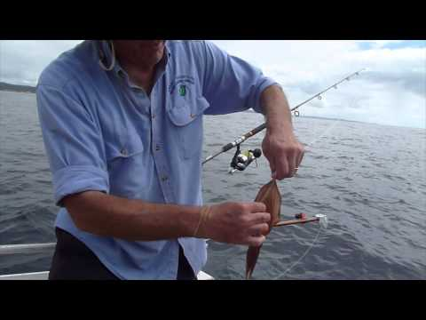 Andys Live Bait Tips And Kingfish - EP 28