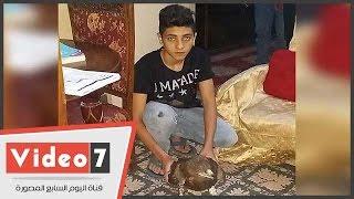 بالفيديو..اليوم السابع بمنزل صاحب نسر كفر الشيخ..وائل: الطائر من نوع العقاب