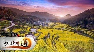 《生财有道》 20190418 咱们家乡春天美 江西婺源:种的是风景 收的是财富| CCTV财经