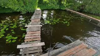 Ловим фидером леща летняя рыбалка на красивом озере