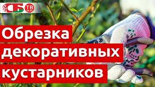 Авторский видеоблог Натальи Тышкевич. Выпуск 8 (Весенняя обрезка декоративных кустарников).