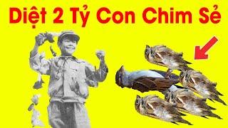 Trung Quốc diệt 2 tỷ con chim sẻ cùng cái kết và bài học cho Việt Nam