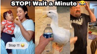 Stop! Wait a minute TikTok meme Compilation #stopchallenge #stopwaitaminute #tiktok