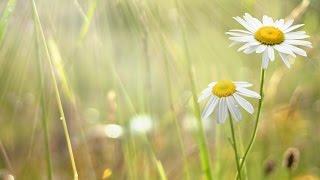 купити квіти у Рівному рівне ціни недорого замовити свіжі придбати замовити букет квітів(купити квіти у Рівному рівне ціни недорого замовити свіжі придбати замовити букет квітів 03397., 2015-03-12T10:53:11.000Z)
