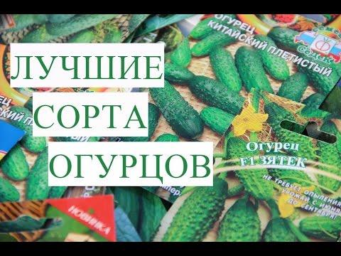 Помидор томат свойства, сорта, выращивание, теплице