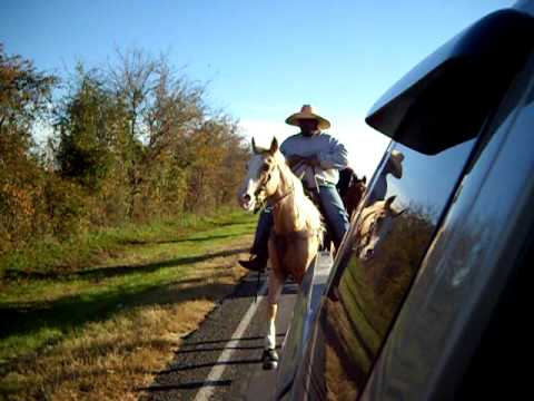 PLAYBOY TRAILRIDING NAVASOTA TEXAS