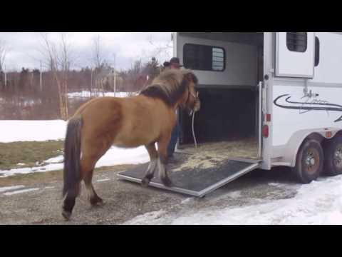 Problem loader Icelandic Horse Jumped Breast Bar.