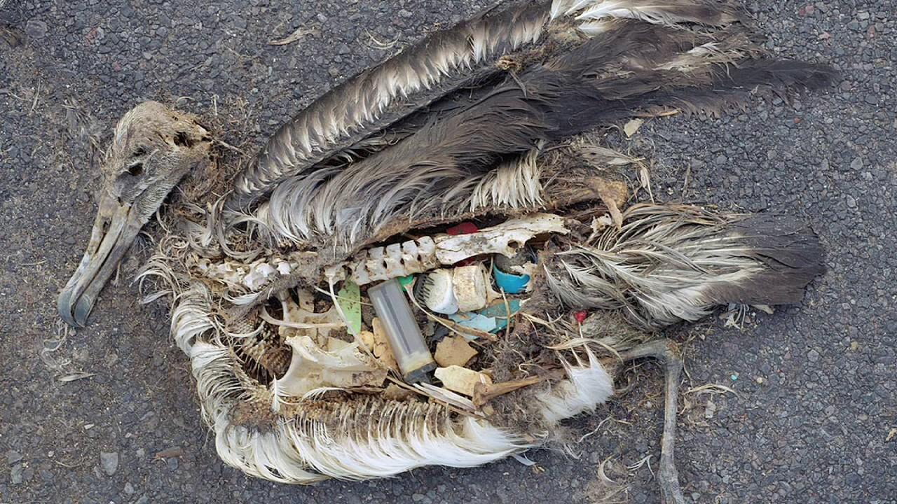 اضرار القمامة/الحلول المتبعة/ تدوير القمامة