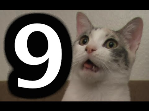 9 awesome things that cats do – Funny cat video compilation
