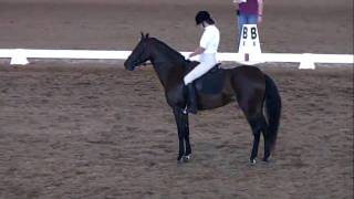 Alatheia Alexandria Dressage TL test 4.mp4 Thumbnail