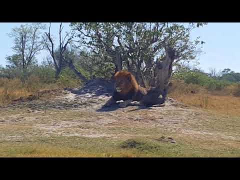 Hartmanns in Botswana Teil 1 Windhoek-Savuti