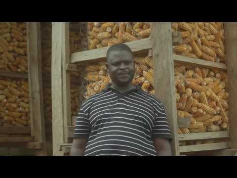 Indigenous maize preservation, Cameroon