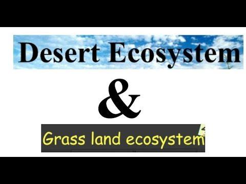 Grassland Ecosystem and Desert Ecosystem