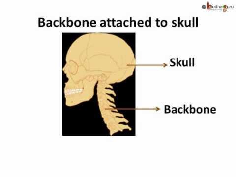 Science Bones In Body How Many