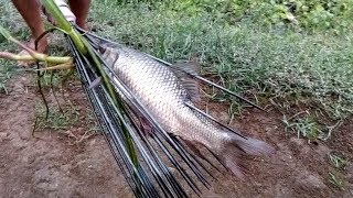 Primitive technology:- Village Fish hunting method:-best fishing ...