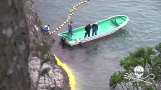 Taiji, Japan - Pilot whale tethered and drowned