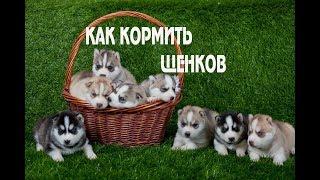 Чем кормить щенков