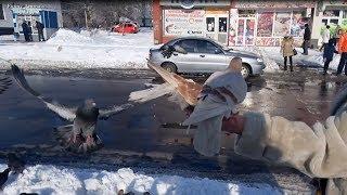 Голодные птицы в зимнем городе (ворона, грачи, голуби, воробьи)