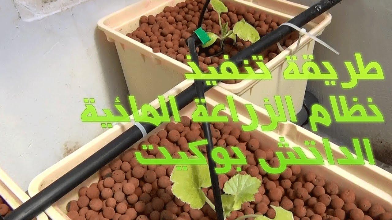 طريقة تنفيذ نظام الزراعة المائية الداتش بوكيت Dutch Buckets Hydroponics Hydroponic Gardening Aquaponic Gardening