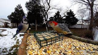 Gopro Bird feeder cam