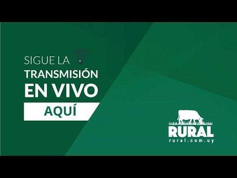 26/05/2019 Las Casuarinas -Ganadera del Norte S.R.L.