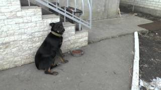 Собака не ест пока хозяин не скажет