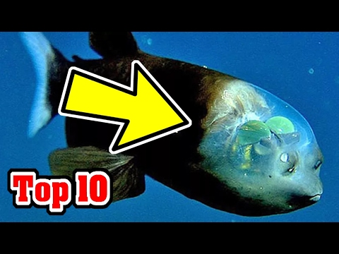 Top 10 Recently Discovered ANIMAL SPECIES In 2016