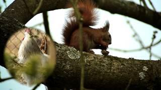 Płonka - Ptaki, zwierzęta- Wiewiórka 09.