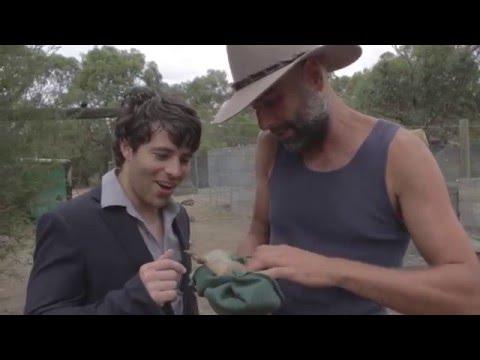 Wildlife Documentary Footage - Improv Session #84