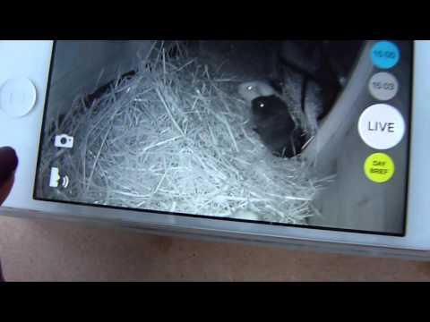 The Guinea Pigs' LIVE Webcam!