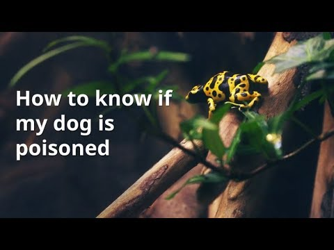 How To Know If Dog Is Poisoned