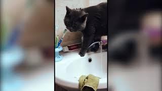Кот моется и...