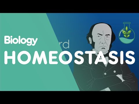 What is Homeostasis? | Biology for All | FuseSchool