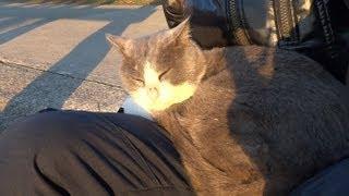膝で寝始める野良ぬこ Sleeping Stray Cat on My Knee