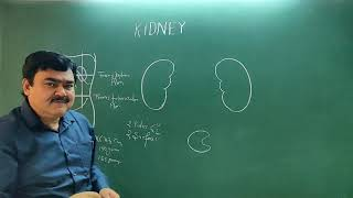 Kidney part 1/3 by Dr A K Singh