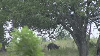 Hunting Wild Boar in Texas