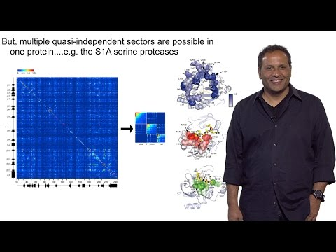 Rama Ranganathan (U. Texas Southwestern) Part 2: A Model for Protein Design